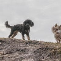 Truffs & Millie-6794