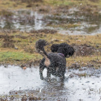 Truffs loving the wet Forest-4834