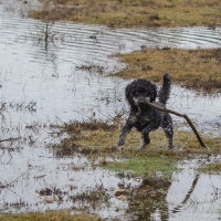 Truffs loving the wet Forest -4837