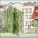 Old Willow Tree - Strand on the Green