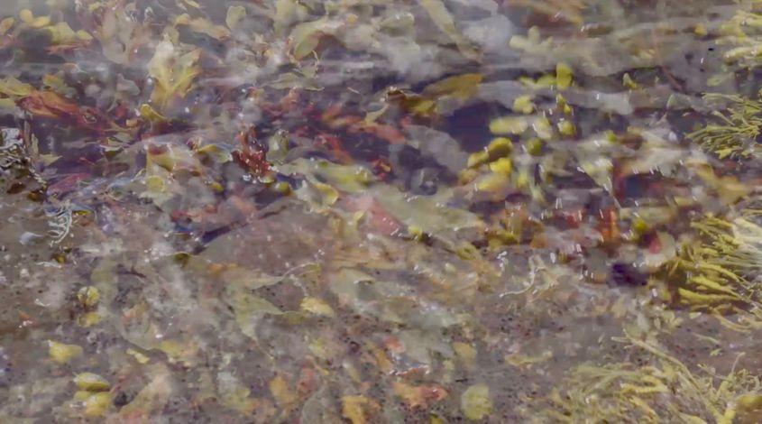 Still image from film 'Rising Tide' (2019)