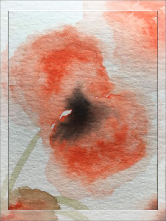Contemporary Watercolour Poppies