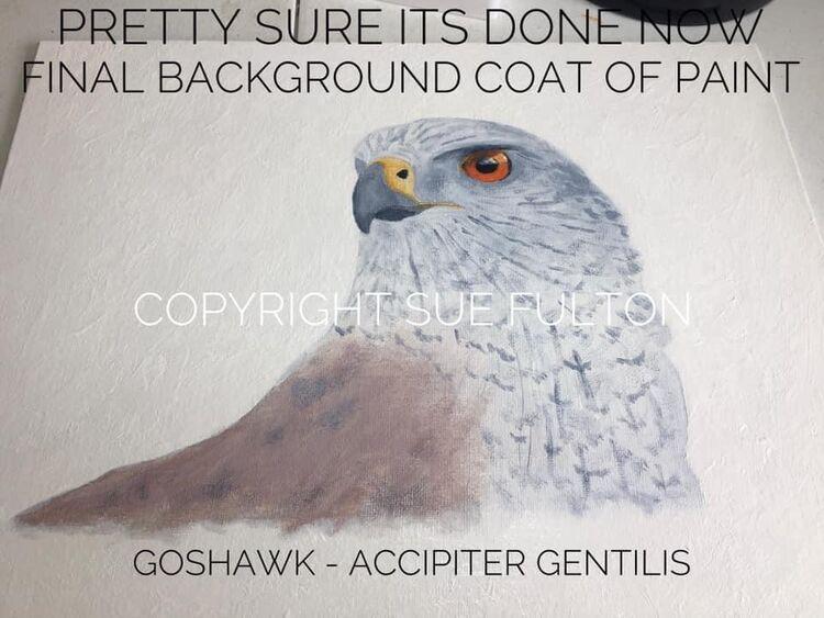 Goshawk acrylic on canvas