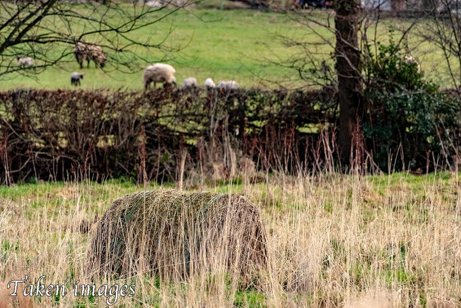 Last Year's Hay