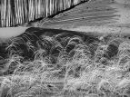 Marram grass and striped sand
