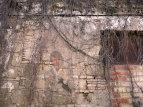 Muro cantando: Maizenita