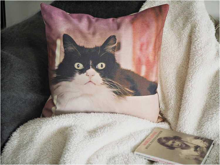 custom pet cushions