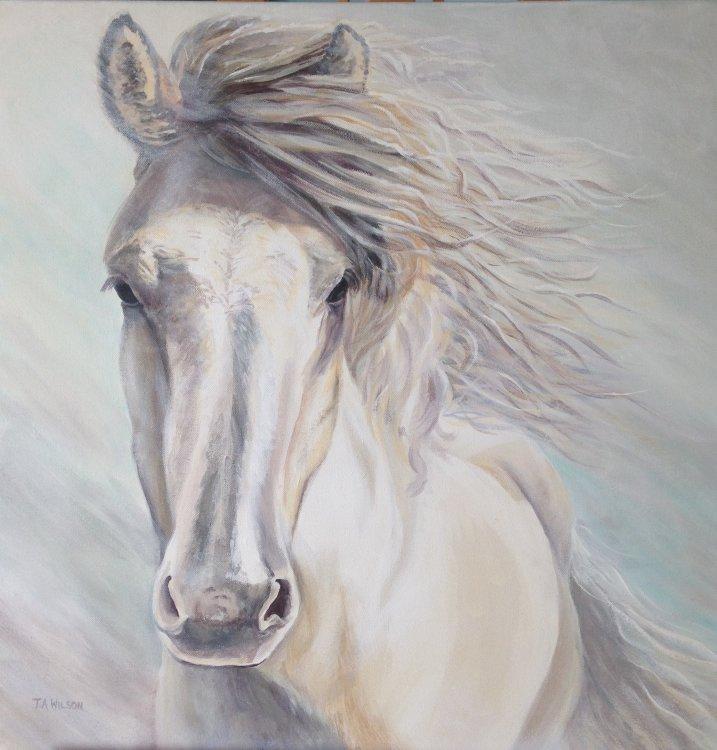 The Distinctive White Horse