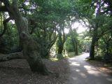 Pathway at Hengisbury Head