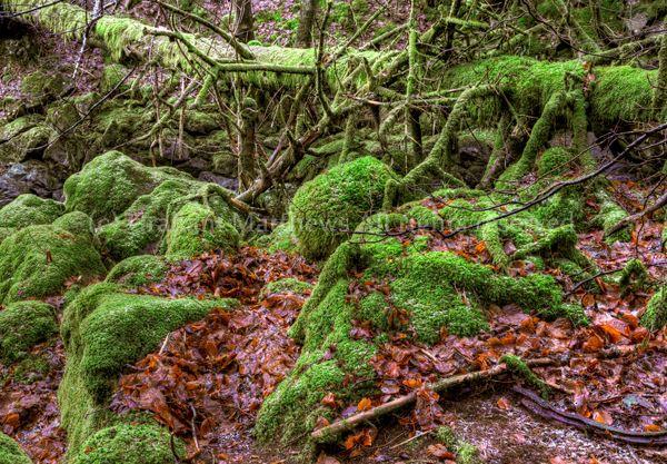 Moss Jungle