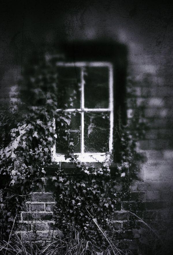 Dillywood Lane Window