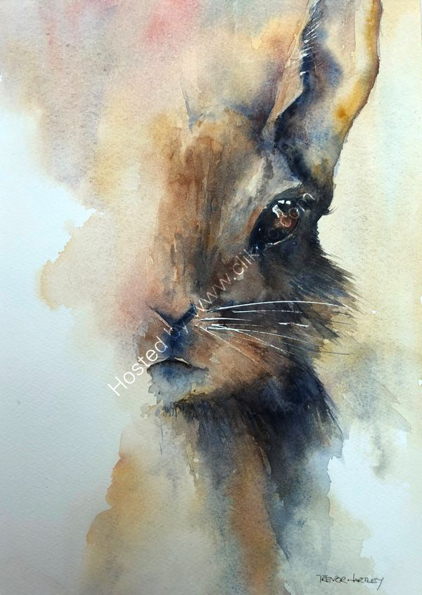 Hare today-Gone tomorrow