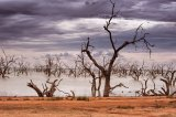Dead Trees Menindee Lakes © Tom Benneyworth LRPS