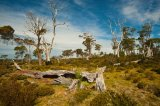 Dead Trees Tasmania © Tom Benneyworth LRPS