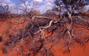 Dead in the Outback© Tom Benneyworth LRPS