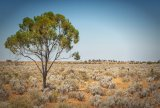 Salt Bush Country © Tom Benneyworth LRPS