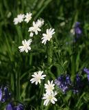 Woodland Flowers 1