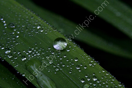 Raindrops on Leaves 1