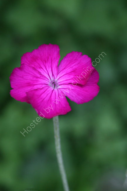 Summer Flowers 10