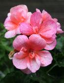 Summer Flowers 6