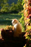 Enjoying the Afternoon Sun