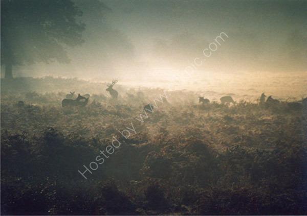 Deer Herd in the Mist