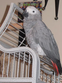Reference photograph for Captain Parrot