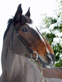 Reference photograph of Benson