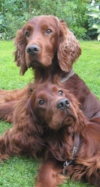 Reference photograph for Barkley and Ted