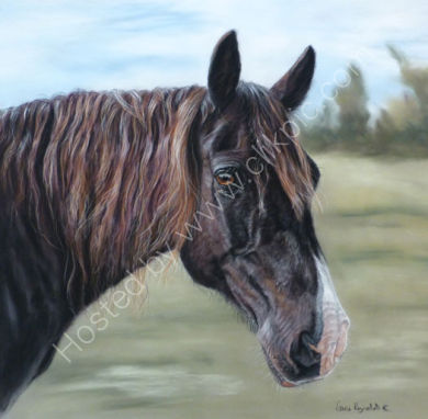This painting of a horse is Cardy, who belongs to Susan