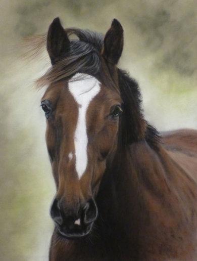 Chris's Horse