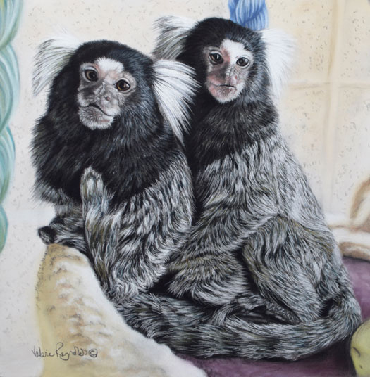 2 little Marmosets