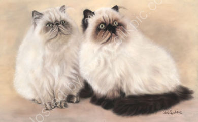 These Persian cats belong to Heather