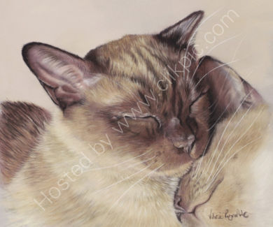 These Siamese belong to Libby.  This is my first eyes closed painting, how cute!