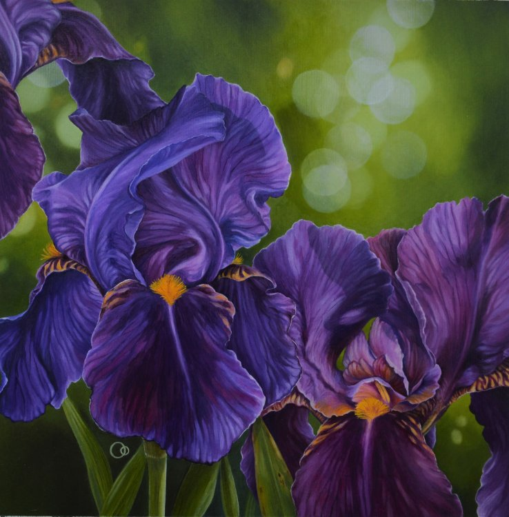 Purple Rhythm Irises Oil Painting Flowers