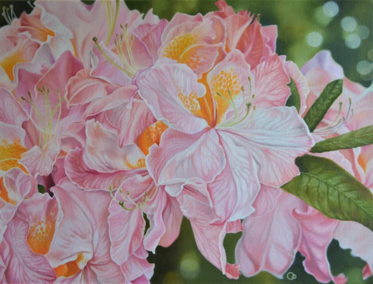 Rhododendrons Floral Oil Paintings Flowers