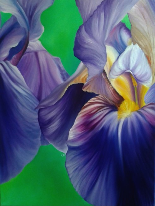 Two Irises Flower Oil Painting