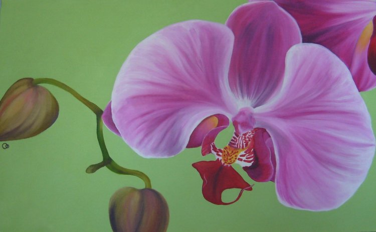 Pink Orchid Acrylic Flower Painting