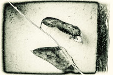 Leaf Pods