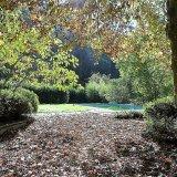 Autumn leaves on main patio
