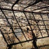 Pergola grid