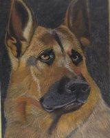 German shepherd c