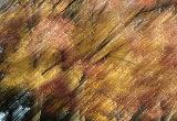 Autumnal hues