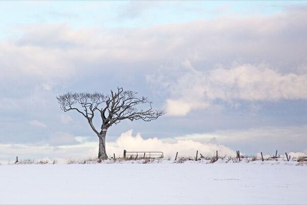The winter tree