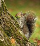 """Nuts!"