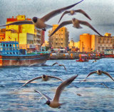 Seagull Madness