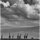 """""""Serengetti Towers"""""""
