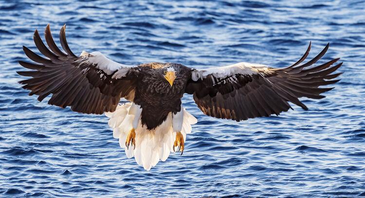 """""""Incoming Eagle"""""""