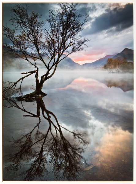 """Lone Tree at Llyn Padarn"""