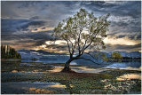 """Tree at Lake Wanaka"""